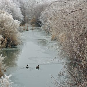 "Made in Nevada ""Frosty Stream"" – Color Photographic Print"