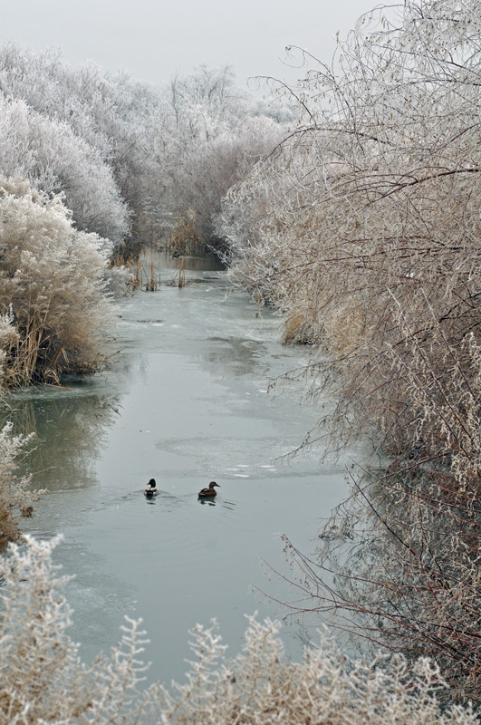"""Made in Nevada """"Frosty Stream"""" – Color Photographic Print"""