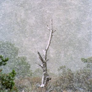 """Made in Nevada """"Snowtree at La Madre Springs, Red Rock, NV"""" – Color Photographic Print"""