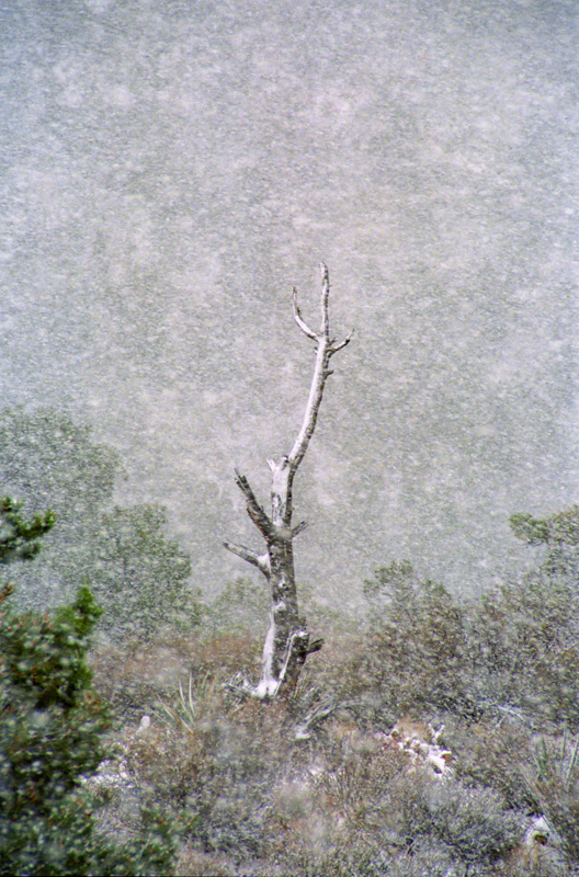 "Made in Nevada ""Snowtree at La Madre Springs, Red Rock, NV"" – Color Photographic Print"