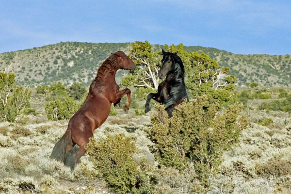"""Made in Nevada """"The Challenge"""" – Color Photographic Print"""