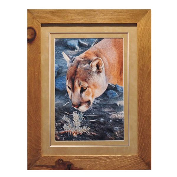 Made in Nevada Cougar and Sage – framed print
