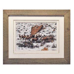 Made in Nevada Desert Bighorn Sheep – Framed print