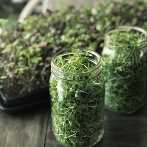 Made in Nevada Seasonal Microgreen Mix